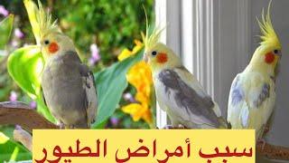 getlinkyoutube.com-أخطاء شائعة في تربية الطيور