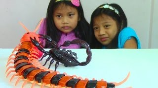 getlinkyoutube.com-Innovation Scorpion and Giant Scolopendra Creepy Crawlers Toys
