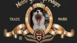 MGM logo with my cat