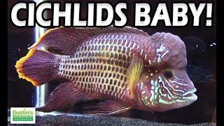 Types of CICHLIDS Species- Sweet Cichlid Species Show