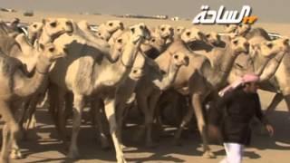 getlinkyoutube.com-مسيرة منقية ناصر بن فطيس الأحيمر الدوسري