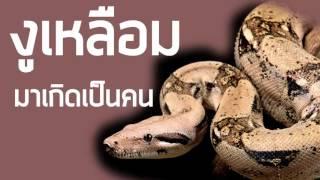 getlinkyoutube.com-งูเหลือมมาเกิดเป็นคน ด.ช.บัวลอย แสงวงศ์