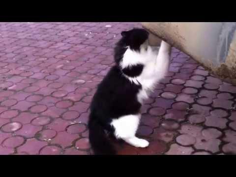 Cat is the drug addict