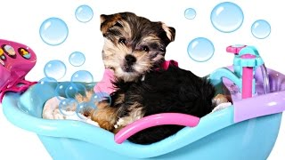 getlinkyoutube.com-Bathtime Puppy Starring Zumi - Baby Doll Bubble Bathtub