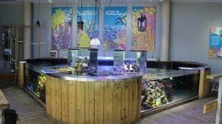 getlinkyoutube.com-Ocean View Aquariums - Miami, FL [Local Fish Store Travel ep. 6]