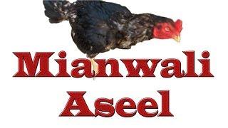 getlinkyoutube.com-Mianwali Aseel