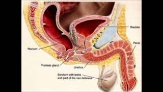 getlinkyoutube.com-How to Get Rid of a UTI  | home remedies for uti | urinary tract infection