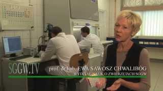 getlinkyoutube.com-Grafen - sukces naukowców SGGW