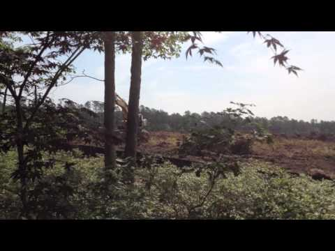 Land clearing at Costco site, Riverhead NY June 2013