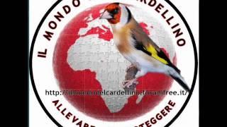 getlinkyoutube.com-Canto del Cardellino File 1