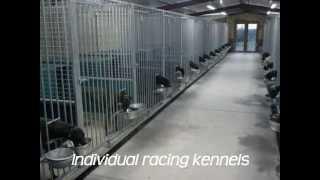 Drumcrow Kennels