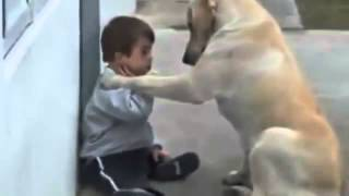 getlinkyoutube.com-Perro Cuida al Niño - Impactante Video De Amor