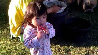 getlinkyoutube.com-Asian Baby Pissed Off Being Videotaped with Pants Falling!!  FUNNY!!!!