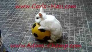 Carlo Masi and Adam Champ little rabbit Maria the killer the first
