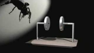 getlinkyoutube.com-Fly Killer