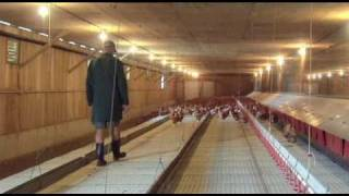 getlinkyoutube.com-Daily Routine -  Free Range Egg Farm  Video