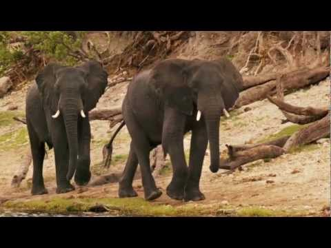 Elephant Energy in Namibia - How We Started