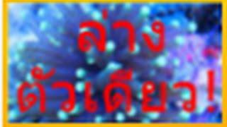 getlinkyoutube.com-สูตรหวยให้ตัวเดียวล่างเข้า 6 งวดซ้อน !!!