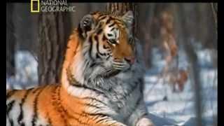 getlinkyoutube.com-LOS ANIMALES MAS PELIGROSOS DEL MUNDO - 5 - ASIA