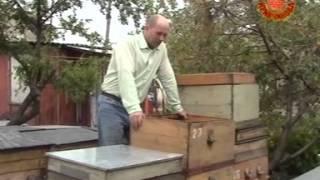 Повышения качества пчелосемей ч1