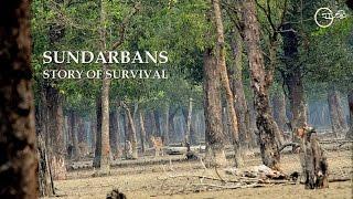 getlinkyoutube.com-Sundarbans - Story of Survival by Green Explore Society HD (720p)