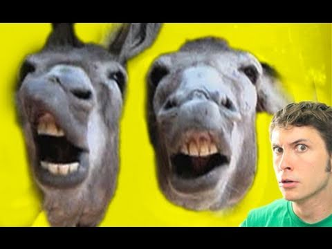 STUPID DONKEYS!