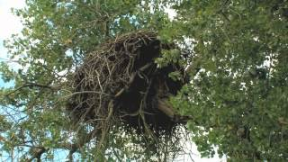 getlinkyoutube.com-Eagle Nest Reborn