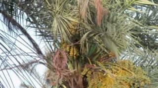 getlinkyoutube.com-أغنية سودانية شايقية / الراسي يوم بابورو صفـر