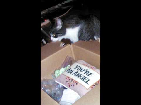 Cat eats box