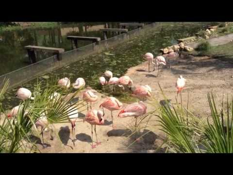 Flamingos on ZooTube
