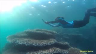 hoga free diving with lia mermide
