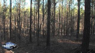 getlinkyoutube.com-Alabama Land For Sale - 475 +/- in Fayette county