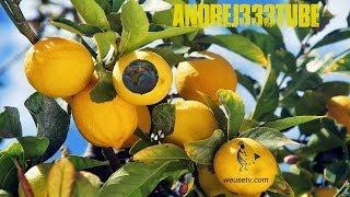 getlinkyoutube.com-Botanica - Potatura del limone