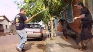 getlinkyoutube.com-rottweiler Stifler fazendo guarda