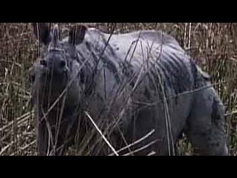 Born Wild: How Kaziranga is preserving India's rhinos (Aired: November 2003)