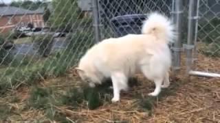 Furkids/Small Dog Rescue - Einstein