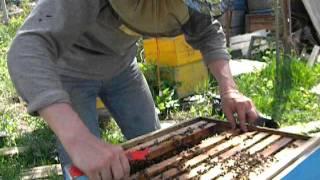 getlinkyoutube.com-Пчеловодство.Весеннее развитие семей на 1 мая.