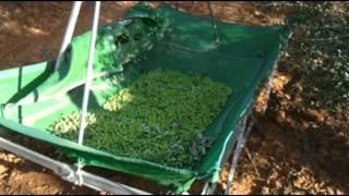 Equipo para recolección de aceitunas