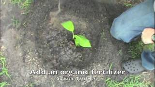 getlinkyoutube.com-How to grow banana trees