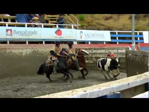 SELLO DE RAZA CABALLOS CHILENOS CHAMPION CRIADORES 4TO ANIMAL.mp4