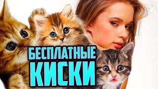 getlinkyoutube.com-ОХОТА НА СЛАДКУЮ КИСКУ