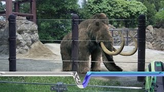 getlinkyoutube.com-The Extinction And Resurrection Of The Woolly Mammoth