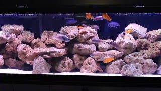 getlinkyoutube.com-African Cichlid Aquarium - 135 Gallon Rock Reef Mbuna Tank Setup