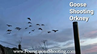 getlinkyoutube.com-How to Decoy Greylag Geese - Goose shooting in Scotland with Orkney goose shooting holidays 2016/17
