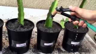 Part 1 of: Planting DragonFruit Trees!