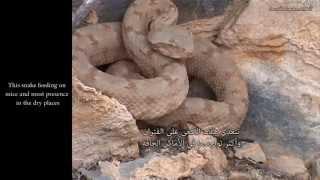getlinkyoutube.com-وادي الأفاعي - Snakes Valley