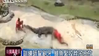 getlinkyoutube.com-鱷魚大暴走 咬住訓練員脖子拖行