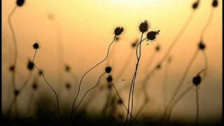 getlinkyoutube.com-Field of Innocence - Evanescence (legendado)