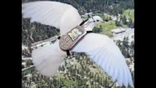 getlinkyoutube.com-Na czym polega hodowla i lotowanie gołębiami pocztowymi...