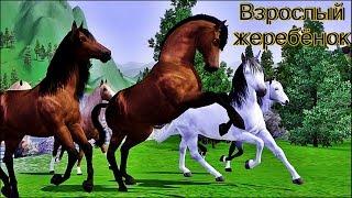 getlinkyoutube.com-Симс 3 - Дикие лошади (Взрослый жеребёнок)
